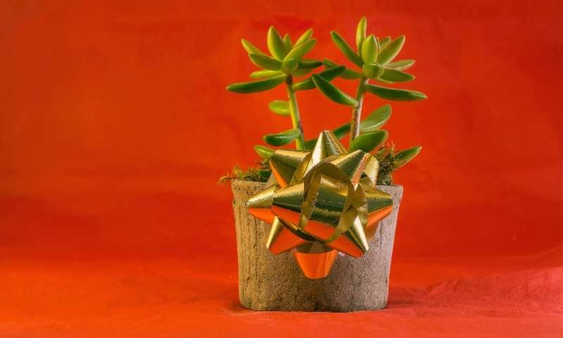 houseplant-christmas-gift